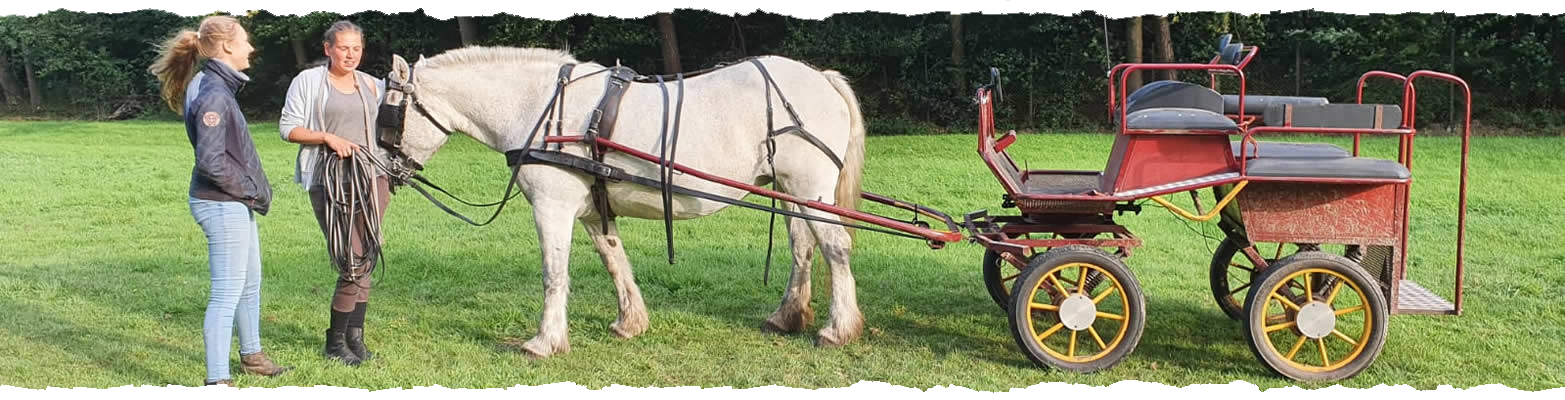 Diensten - Ponystal Banjer